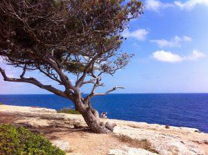 Bewegung Wandern Yoga Mallorca Inselauszeit Wanderurlaub Entgiftung Achtsamkeit